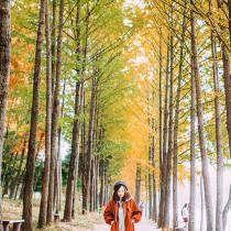 Cách đi từ Seoul ra đảo Nami