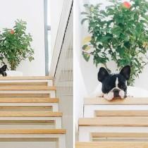 Chú chó trung thành Pun Pun