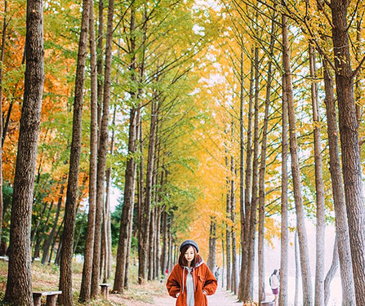 Hàn Quốc | Tự đi từ Seoul ra đảo quốc Nami đón mùa thu lá vàng