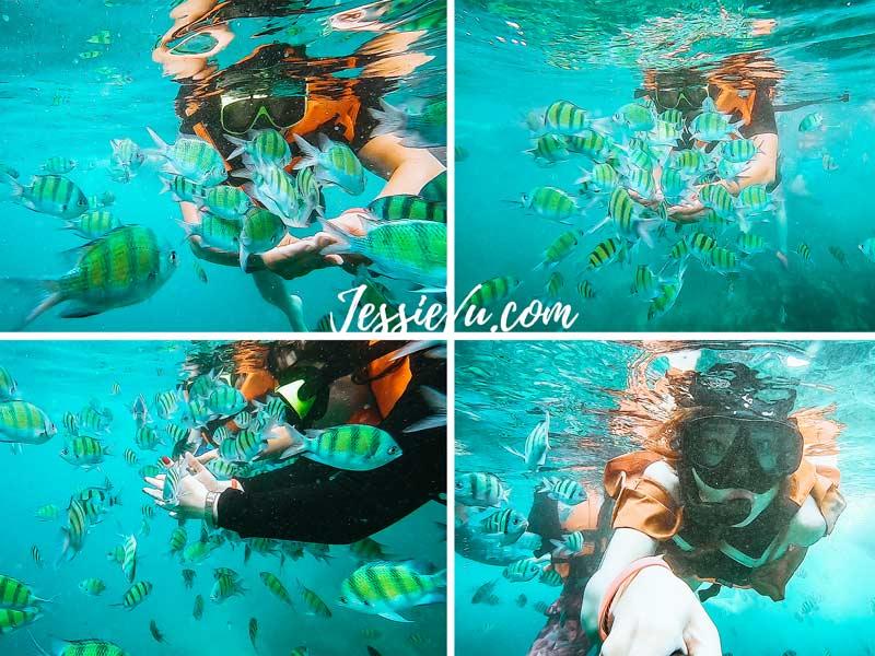 Lặn biển Koh Phi Phi